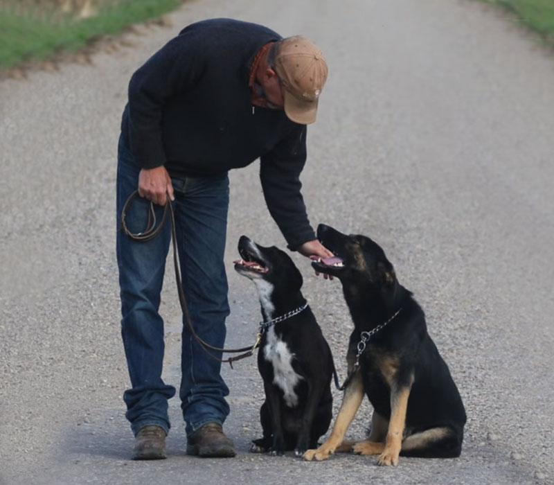 Peter's dog training tips